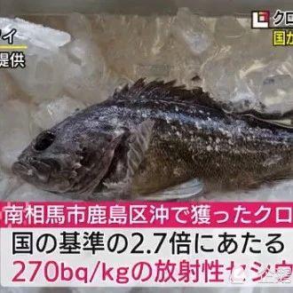 日本禁止福岛黑鲉鱼上市!核污水还没排放,已检出放射性物超标2.7倍