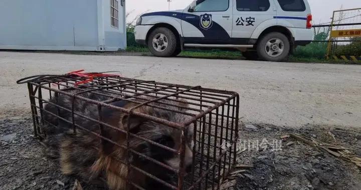 在逃野兽出没在柳州这工地,连警察都惊动了
