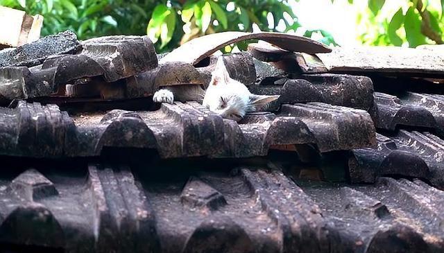 2只小猫被困在屋顶,却被德牧意外发现,带着主人来相救,太有爱