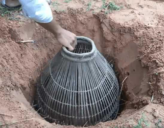 男子野外将竹篓埋入泥土中,挖开后捉到这种珍贵东西