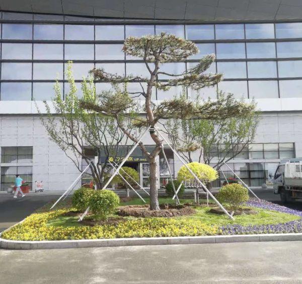 长春机场完成花坛绿化工程——春色满眼 生机无限