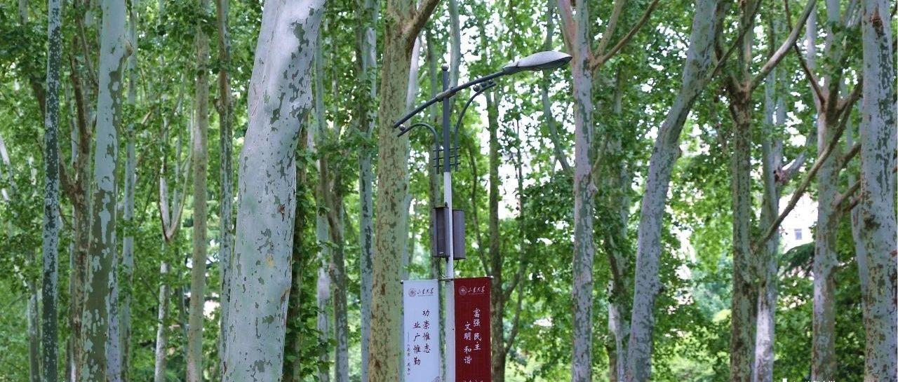 百廿校庆 | 马大为:永远的小树林