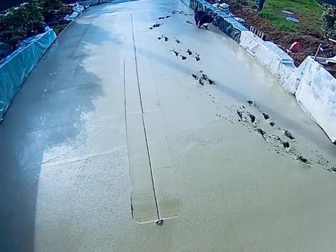 刚修好的水泥路,就被狗狗弄成这样,主人要崩溃了