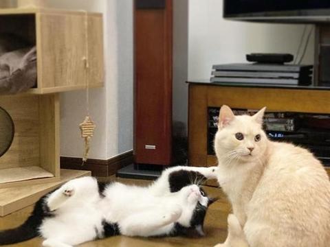 奴才新买的懒人软垫意外俘虏家里猫猫的心,露出了谜样微笑!