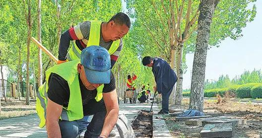 大庆高新区:撒播花种治理裸露地,7月中下旬将建成两处扶桑花海