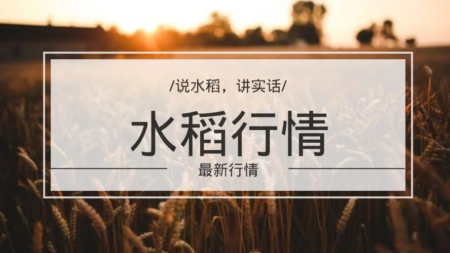 """水稻无限落寞,或""""优质优价""""还有一线生机?"""