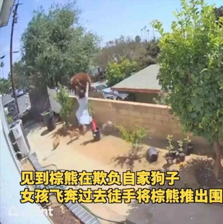 为救狗子,17岁女孩徒手把棕熊推了下去……