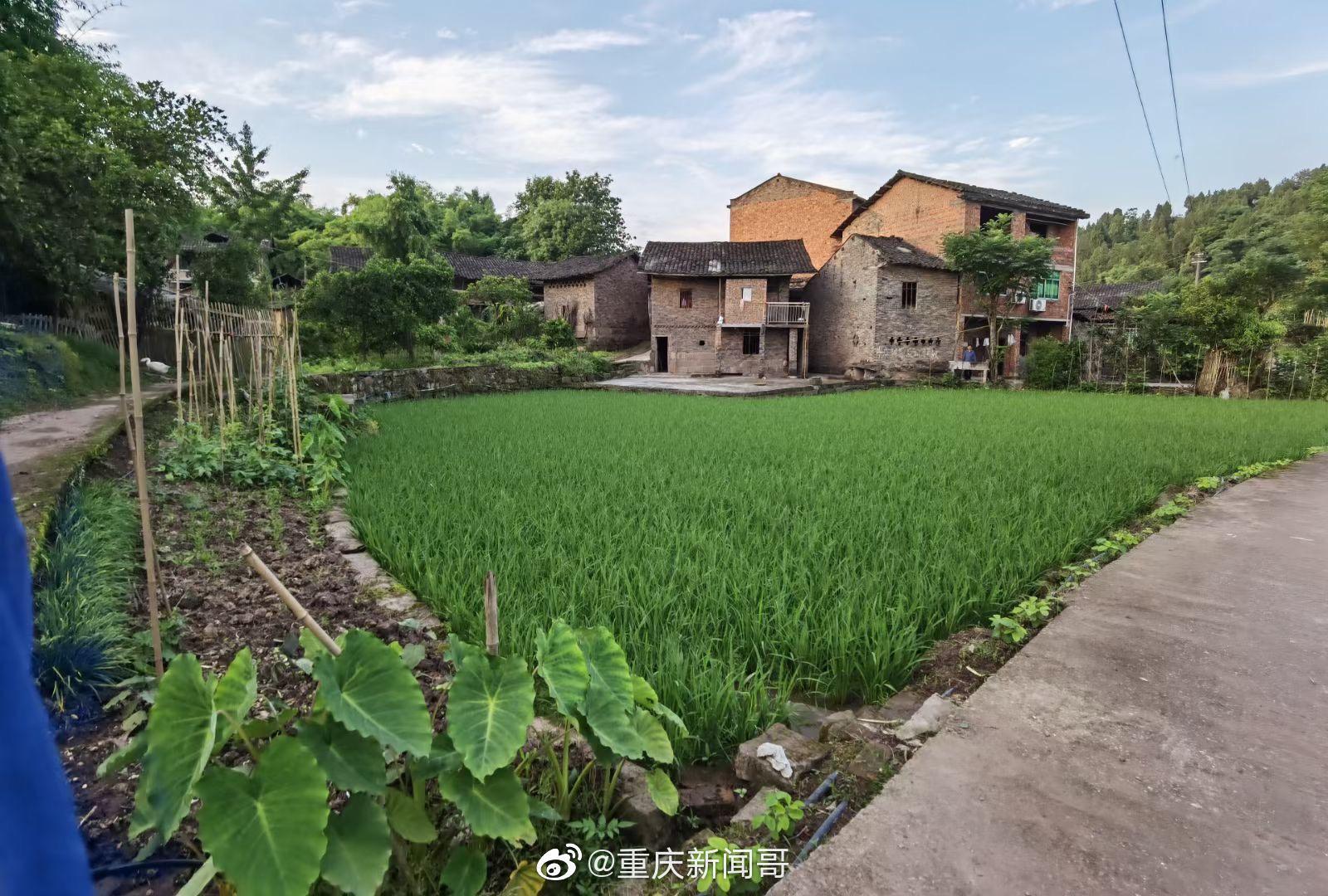 考察重庆石柱县王场镇的乡土院落……