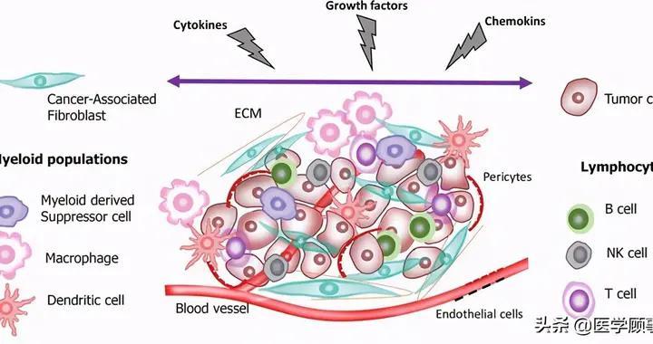 探索肿瘤微环境,免疫细胞(TILs)知多少?