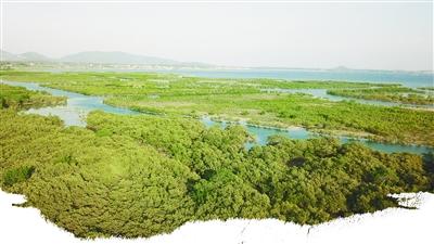 天蓝水碧红树绿 和谐生态绘新景