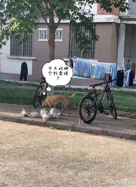狗子偷外卖被抓现场 狗子:还以为是大自然的馈赠
