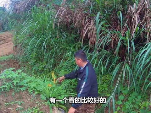 小伙河沟钓鱼,在田坝草窝里发现30元一斤的黄花,扒开一看乐坏了
