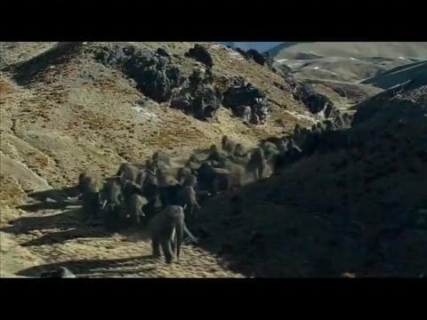 原始人捕猎也是靠脑子的,一个陷阱,就把猛犸象放倒了