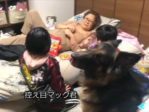 德牧很心塞,家人吃零食没它的份儿,狗:我不是亲生的?