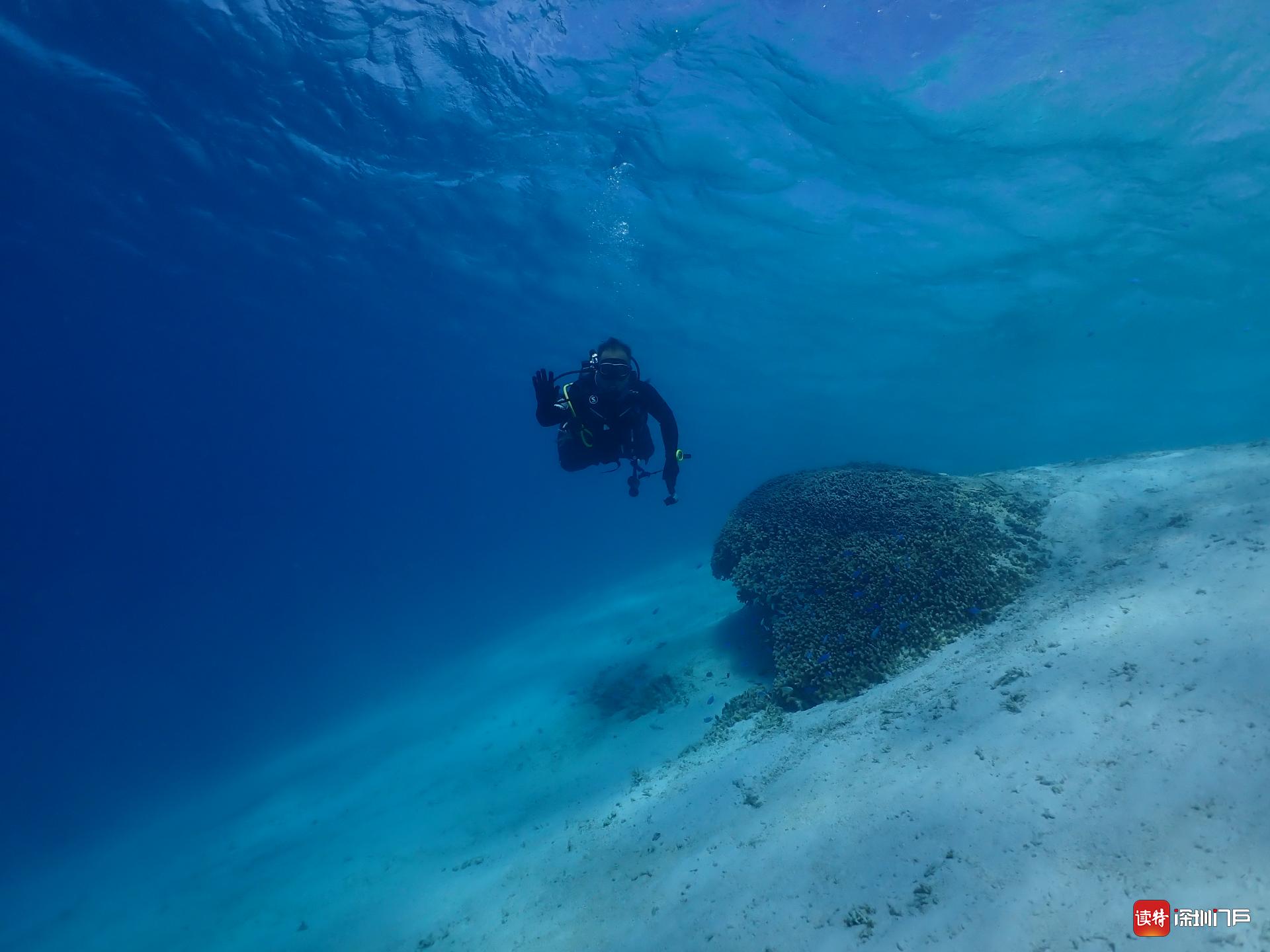 专访|珊瑚礁生态学专家刘胜:以科学视角直播野生珊瑚产卵,这很难得!