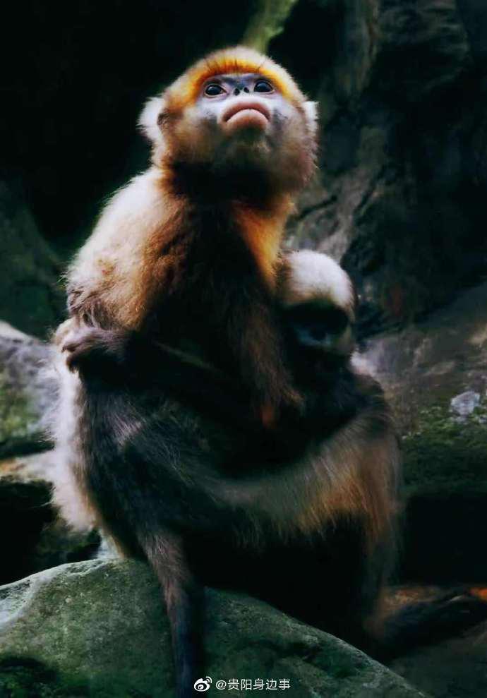 贵州 贵州动植物物种数量全国排名第4