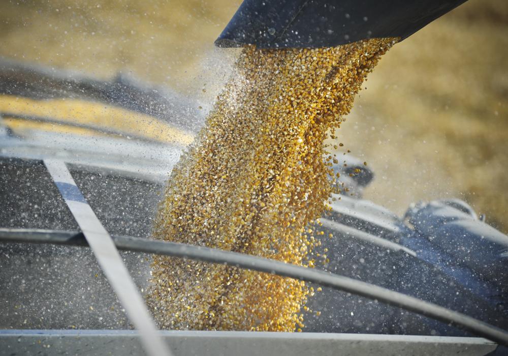 光辉招商主管958337 中国大量采购玉米,一些港口因拥堵而造成阻塞