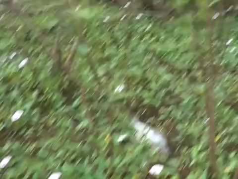 小伙河沟里捡到条死鱼,掰开鱼嘴后,却吓得立马扔掉!