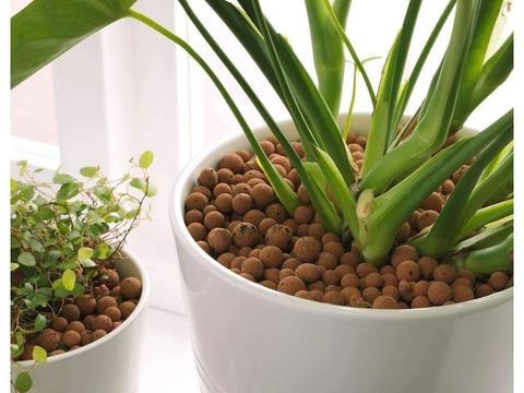 自己增加养花的难度,别乱在盆土上铺石头,即便是陶粒也不行