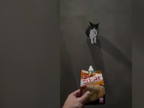 猫咪深夜蹲门口等主人回家,主人:不管多晚它都会等