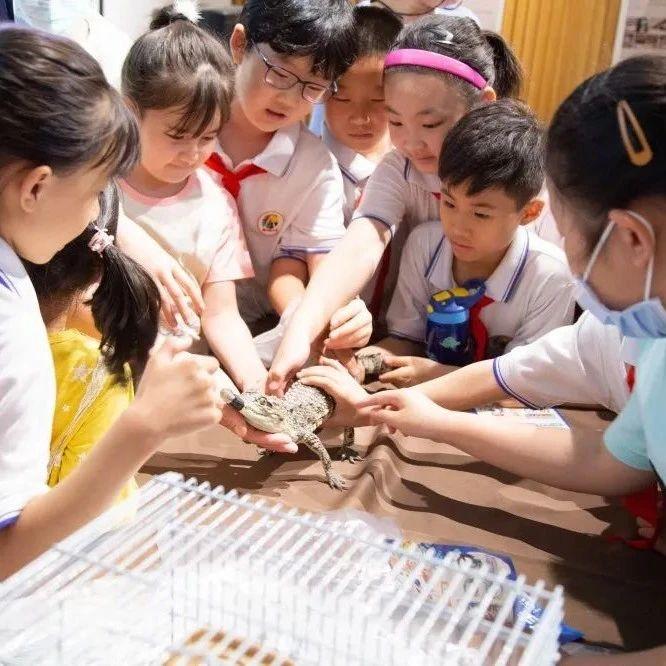 龙猫、安哥拉巨兔、泰国小鳄鱼......一起来康康