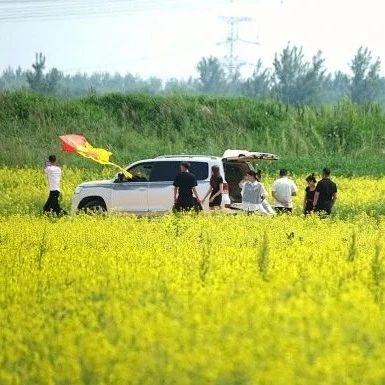 【网络中国节·端午】辽河畔千亩油菜花开如海