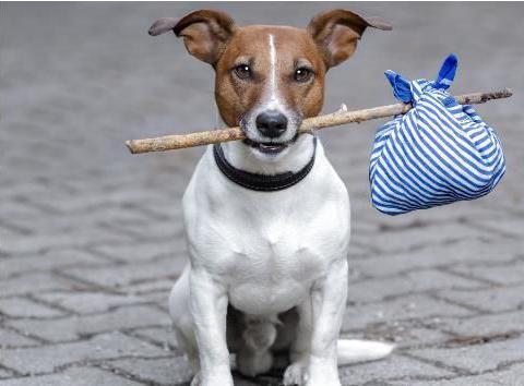 生肖狗:老天给你准备了天大的喜宴,就在明天,属狗人要接住!