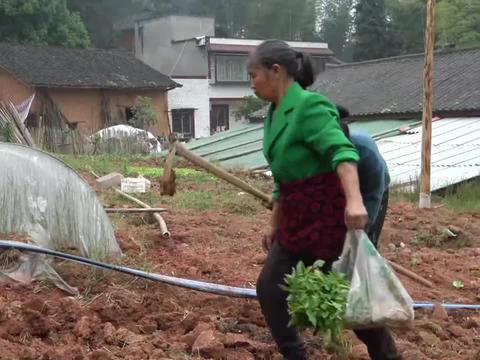 农村王四:英子赶集回家,买了幼苗种子,两婆媳去地里种下!