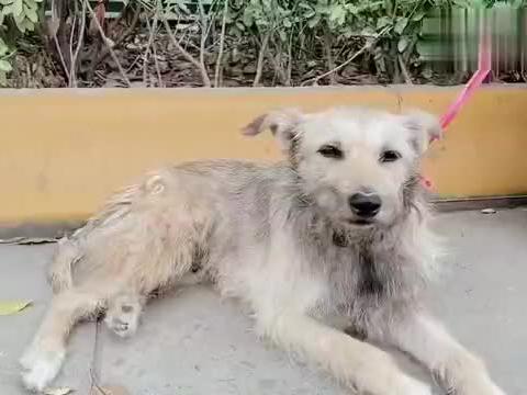好心的阿姨捡到流浪狗,给它做检查,最后带它回家!