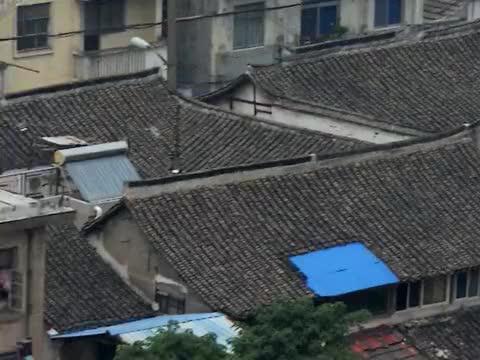 """上海金山""""小白龙信俗""""入选第五批国家级非遗项目名录"""