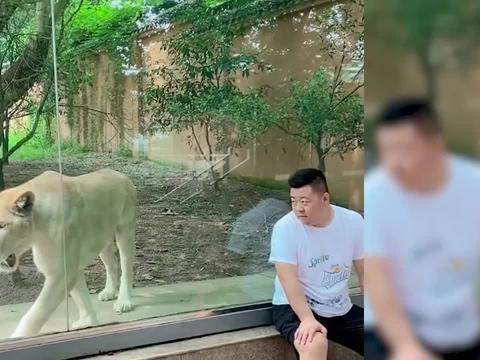 浙江一萌娃担心爸爸被吃掉追着狮子不停唠叨,狮子的反应让人笑喷