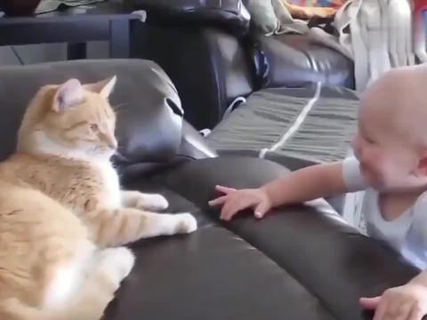 狸花猫:人类的小宝宝可真好玩啊。哈哈