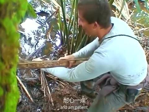 荒野求生:谁才是食物链顶端的生物?食人鱼也是贝爷的盘中餐!