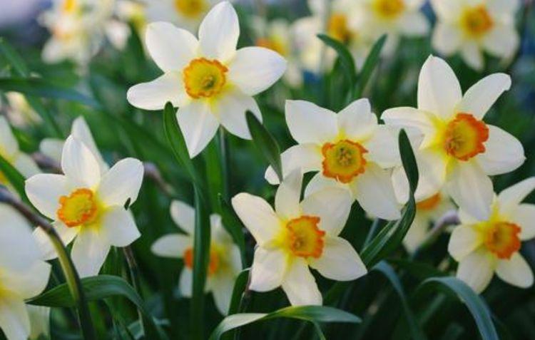 花美易爆盆,家里养几种花,五彩缤纷,阳台变成小花园