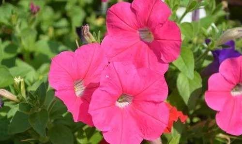 家里养上5种花,阳台秒变小花园,美丽鲜花,亲戚朋友都羡慕