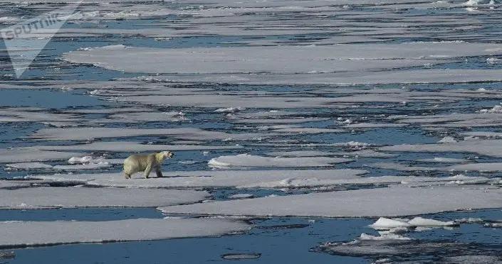世界自然基金会:俄罗斯已开始气候移民进程
