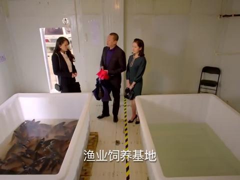 安清欢找到渔业公司新工作,竟然直接到养殖基地,开始了分鱼工作