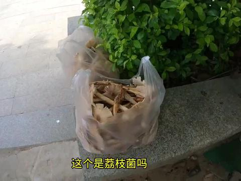 自驾游中国,来到广州增城,街边偶遇卖野生菌的,一问价格被吓到