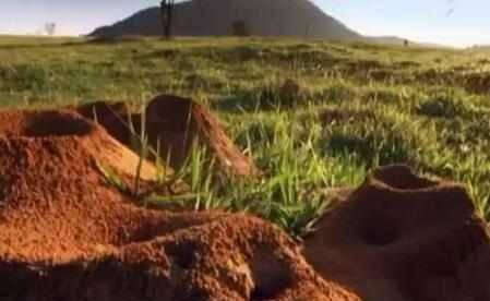 男子好奇蚂蚁的构造,灌10吨的水泥下去,挖开后叹为观止