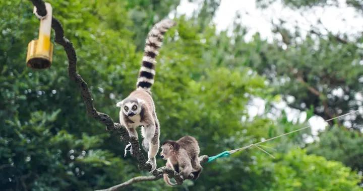 宁波亲子游,打卡当地最美的动物园