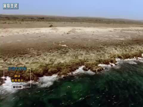 加勒比海地区沙漠群岛上的动物依靠何生存?大风缺水带来竞争!