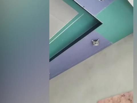 男子装修吊顶不慎把猫封里面了,网友看后笑喷:这监控哪买的?