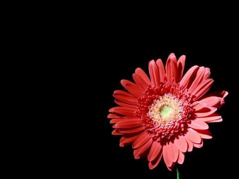 夏天之前就养几种花吧,耐热抗晒,开花多真美艳