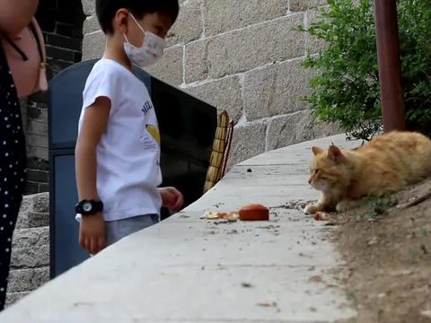 八达岭长城北六楼有只黄橘猫,为了获取食物对游客百依百顺