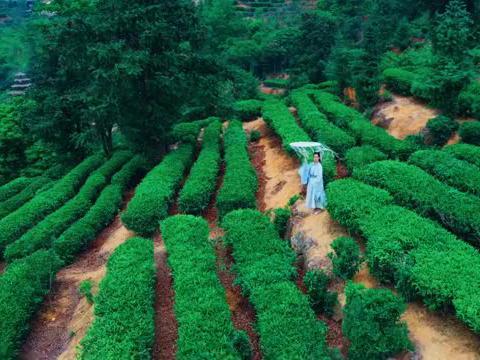 广东梅州小众景点,在茶山拍唯美古风照