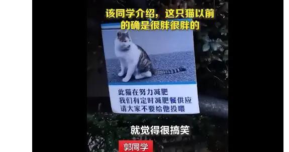 流浪猫因吃太胖被挂牌强制减肥 猫:我没有,我不减