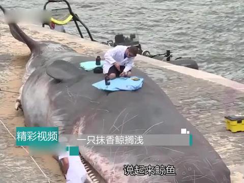 """一条18米长""""大鲸鱼""""搁浅,人们为何在它身上乱划?镜头拍下全程"""