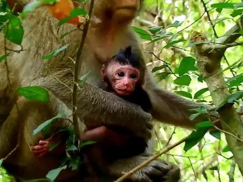 小脏猴虽然有点脏,但是却非常的可爱,超呆萌!
