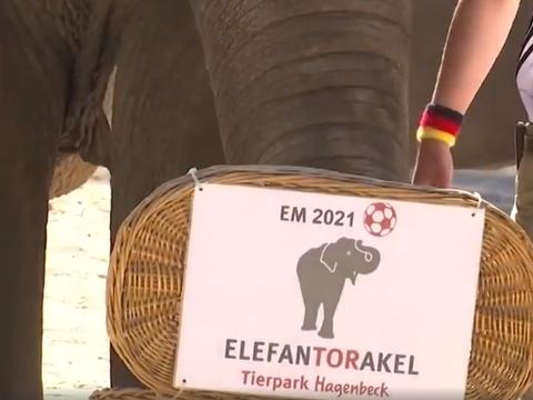 德国大象预测法国获胜,管理员:不知该哭还是该笑