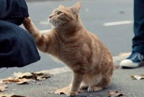 猫咪为什么很难长寿?是什么导致的?